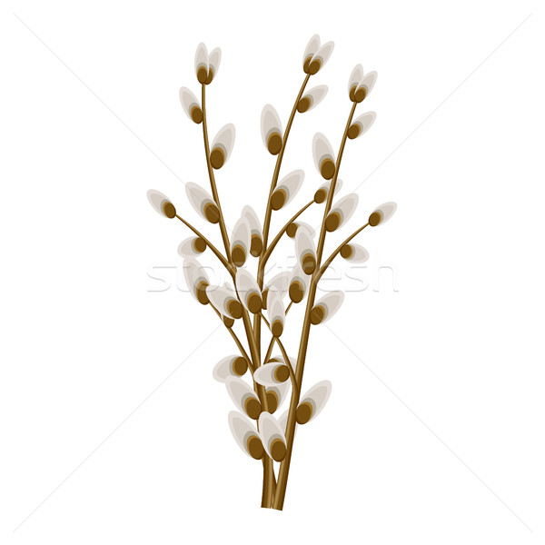 ива изолированный иллюстрация белый символический Сток-фото © robuart