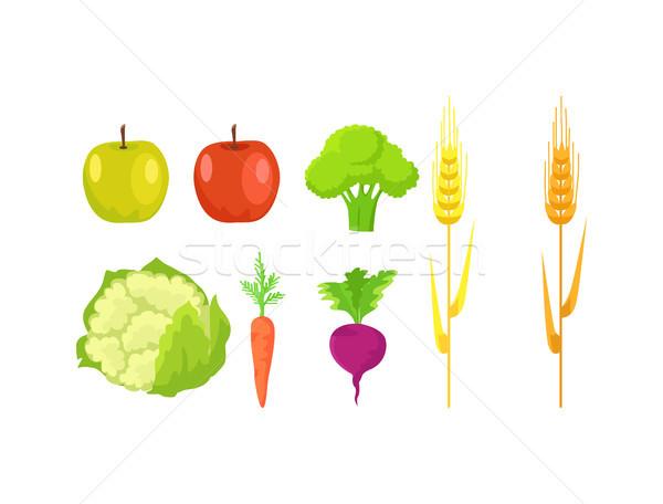 Alma brokkoli karfiol sárgarépa retek búza Stock fotó © robuart