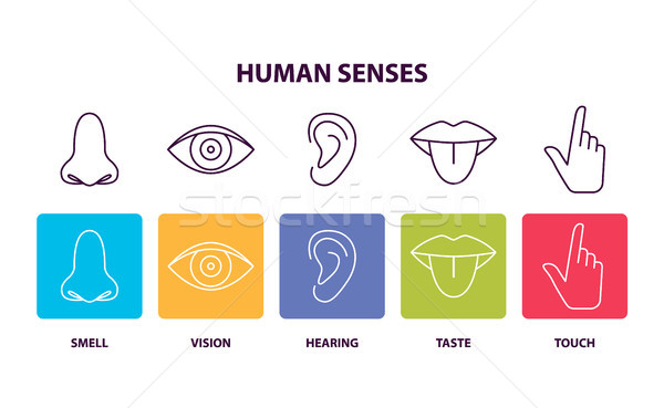 Human Senses Informative Poster with Body Parts Stock photo © robuart