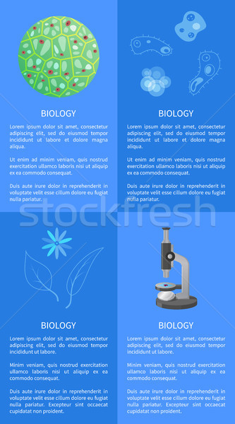 Biologie info internet texte modernes Photo stock © robuart