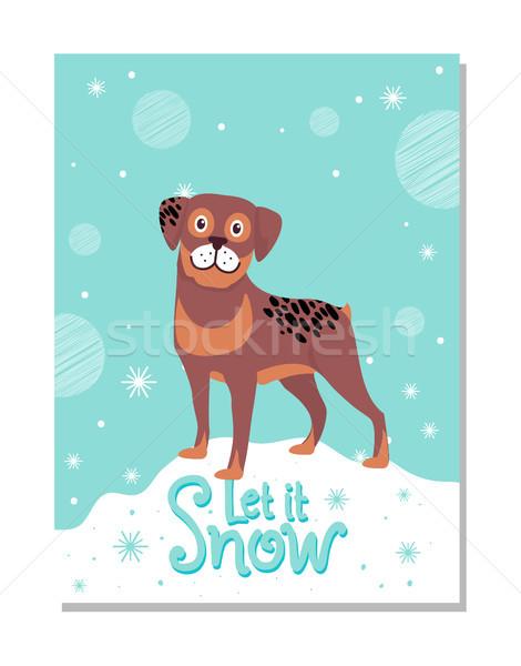 Neige affiche rottweiler adorable fidèle chien Photo stock © robuart
