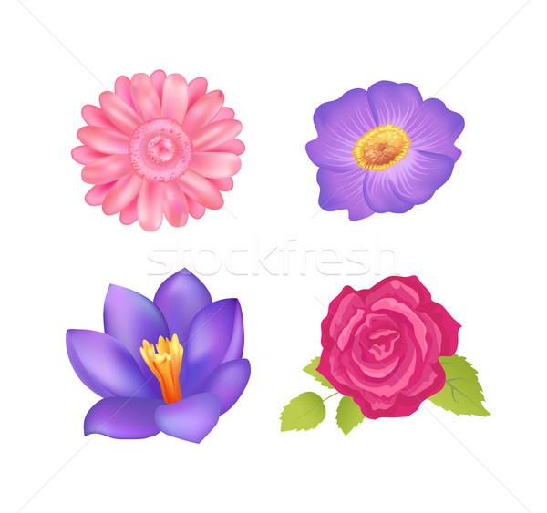 Flowers Set Poster Decor, Vector Illustration Stock photo © robuart