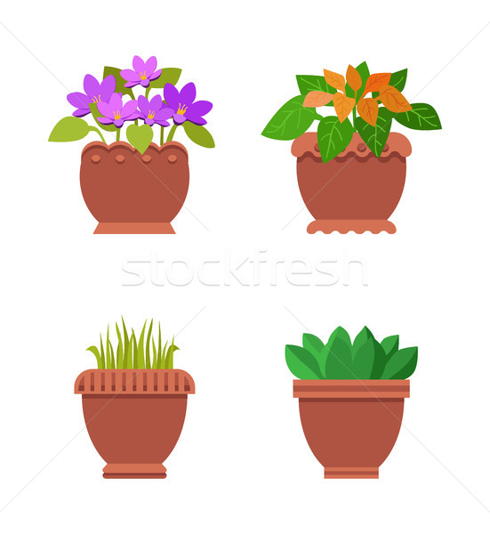 Room Plants in Pots Collection Vector Illustration Stock photo © robuart