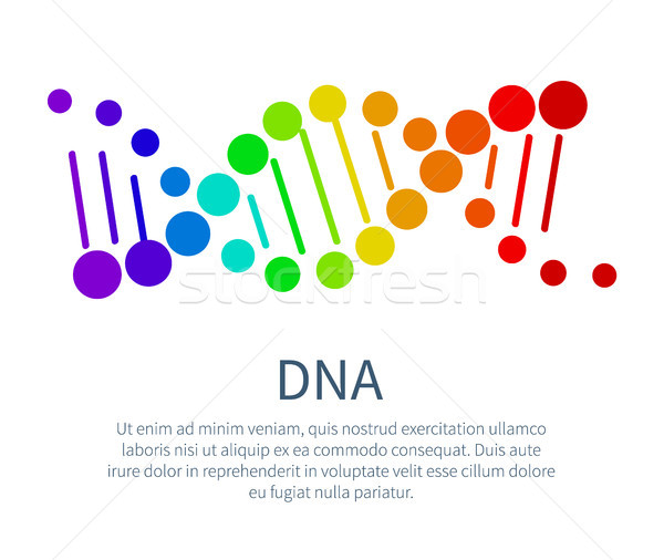 DNA Chain in Rainbow Colors on Scientific Poster Stock photo © robuart