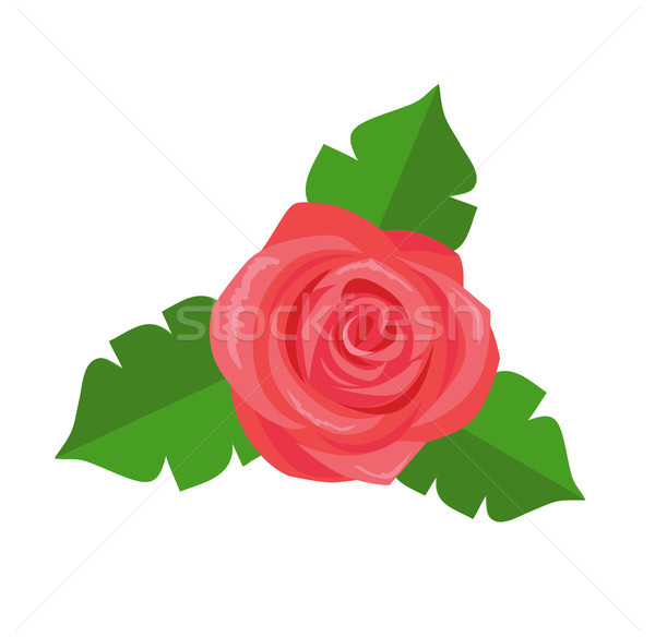 Rose Flower Green Leaves Vector Decorative Sticker Stock photo © robuart