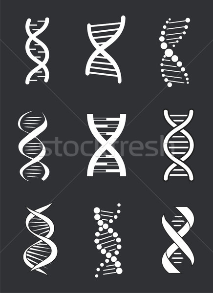 DNA Macromolecule Human Individual Genetic Code Stock photo © robuart