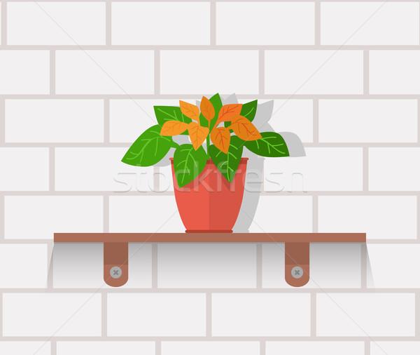 Houseplant Design Flat Concept Stock photo © robuart