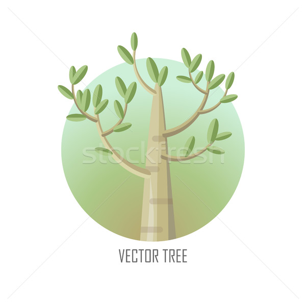 Poplar Tree with Green Leaves. Stock photo © robuart