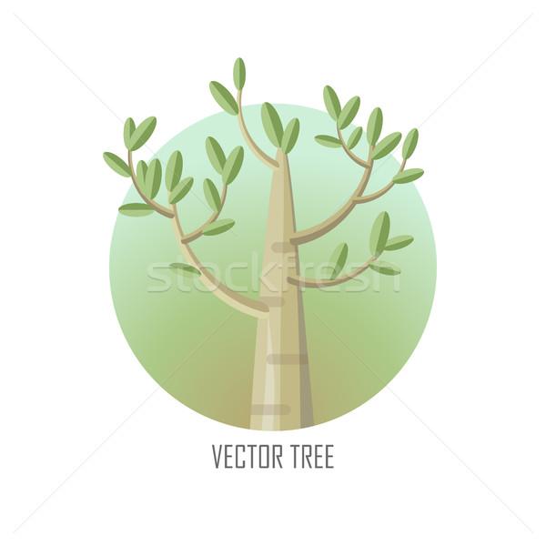 Topola drzewo zielone liście wektora ikona lasu Zdjęcia stock © robuart