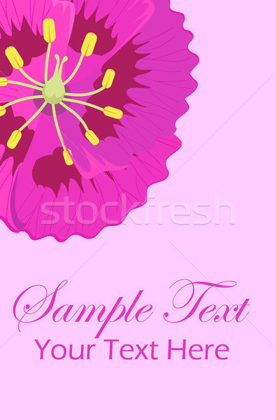 Greeting leaflet with purple viola flower in corner Stock photo © robuart