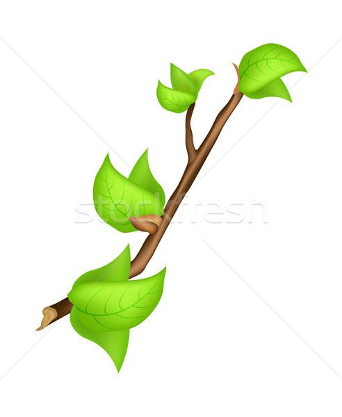 филиала зеленый лист весны символ изолированный белый Сток-фото © robuart