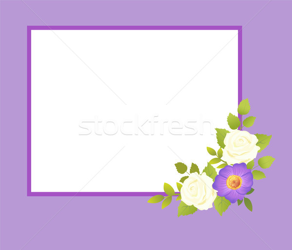 Purple кадр белый закрывается цветы нежный Сток-фото © robuart