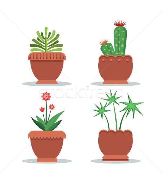 Green Fresh Room Plants Grown in Big Clay Pots Set Stock photo © robuart