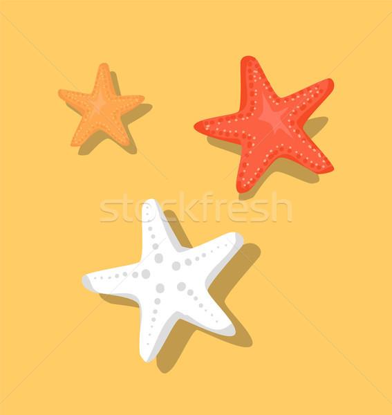 Zeester zee sterren ingesteld geïsoleerd beige Stockfoto © robuart
