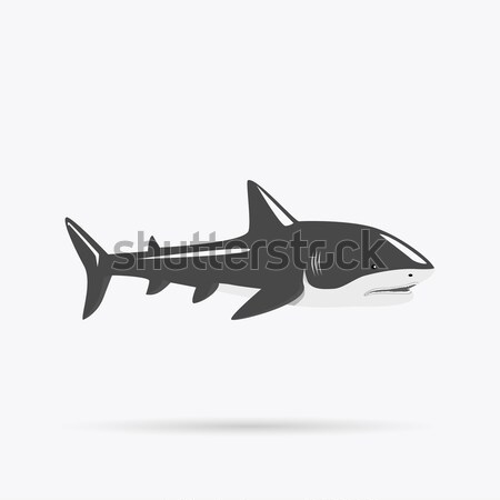Marine Predator Shark Design Flat Stock photo © robuart