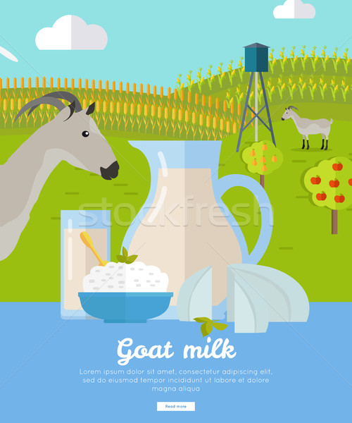 Goat Dairy. Milk Farm Concept Banner Vector Stock photo © robuart