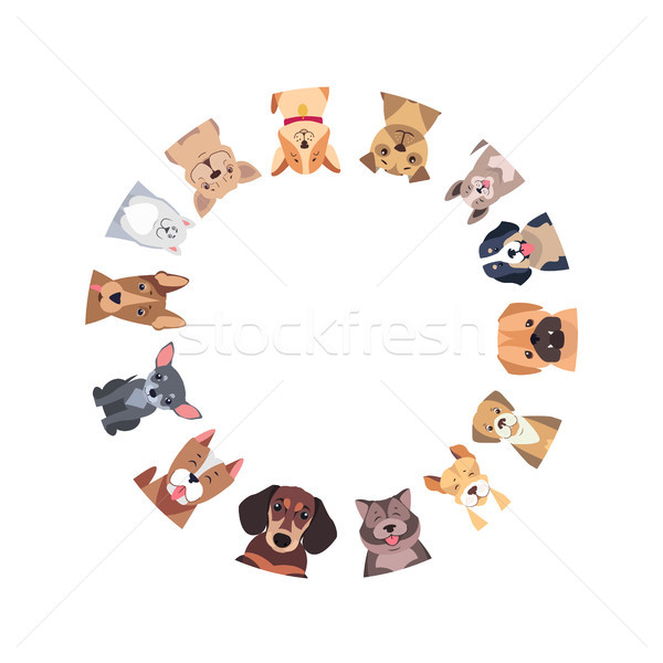 Circle of Different Purebred Dogs. Vector Stock photo © robuart