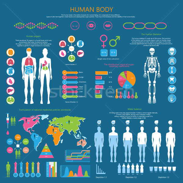 Human Body Detailed Infographic with Statistics Stock photo © robuart