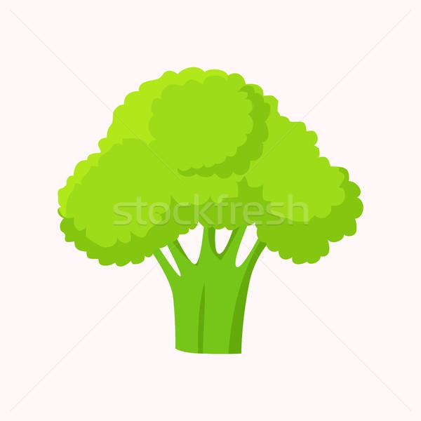 西蘭花 綠色 頭 花 芽 孤立 商業照片 © robuart