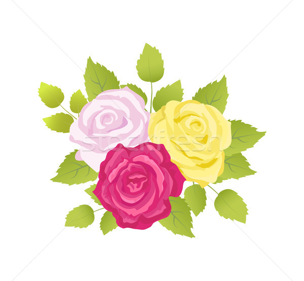 Bouquet of Roses Poster Set Vector Illustration Stock photo © robuart