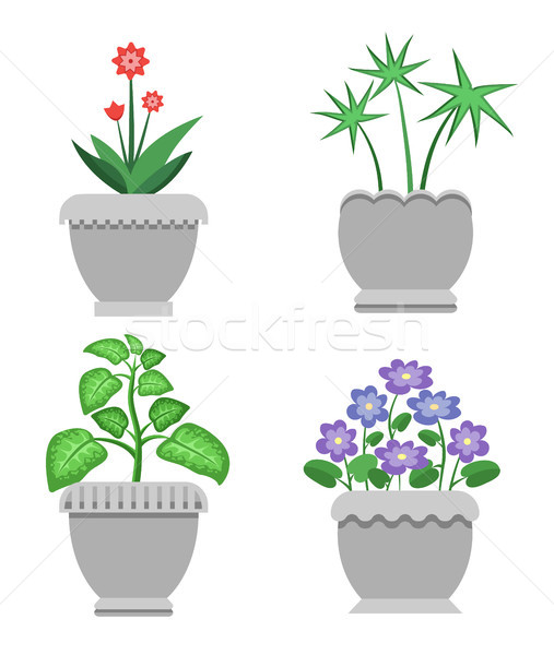 Indoor Plants and Flowers in Ceramic Pots Set Stock photo © robuart
