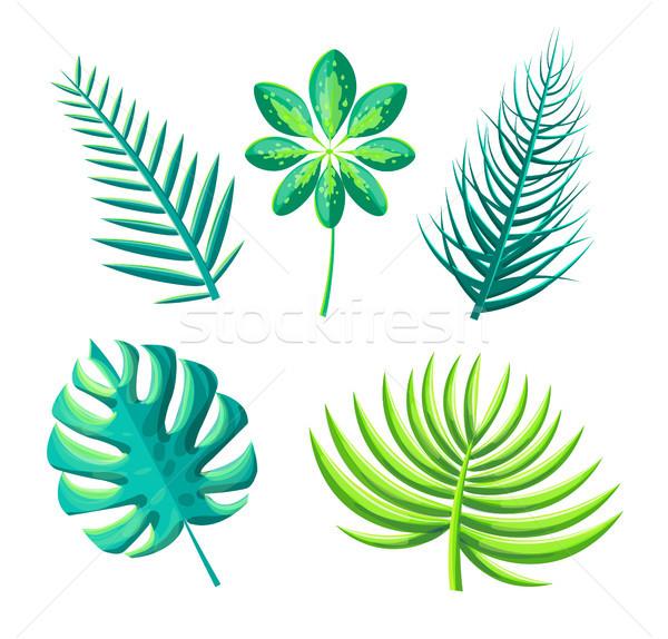 Levél egzotikus növények szett gyűjtemény ikonok Stock fotó © robuart