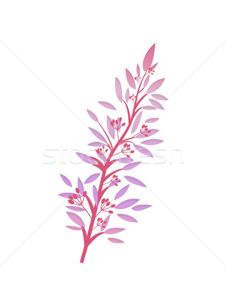 Thorny Shrub with Pink Leaves Red Berries Vector Stock photo © robuart