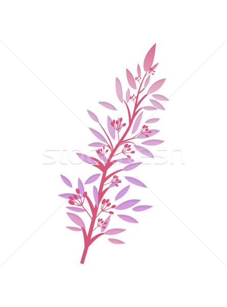 Arbusto rosa foglie rosso frutti di bosco vettore Foto d'archivio © robuart