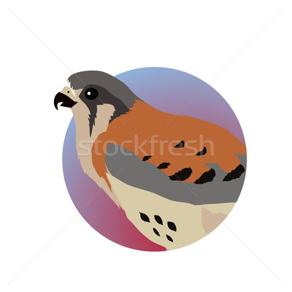 American Kestrel Flat Design Vector Illustration Stock photo © robuart