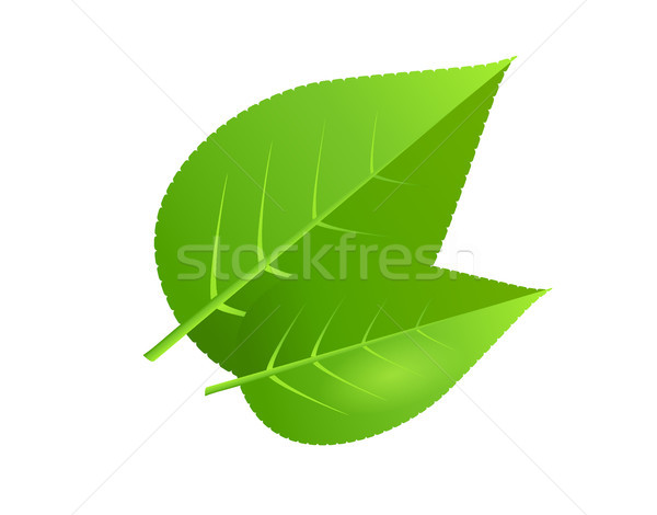 Two green tree leaves vector illustration Stock photo © robuart