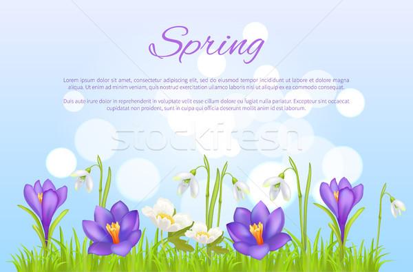 весны плакат весна цветы Purple Сток-фото © robuart