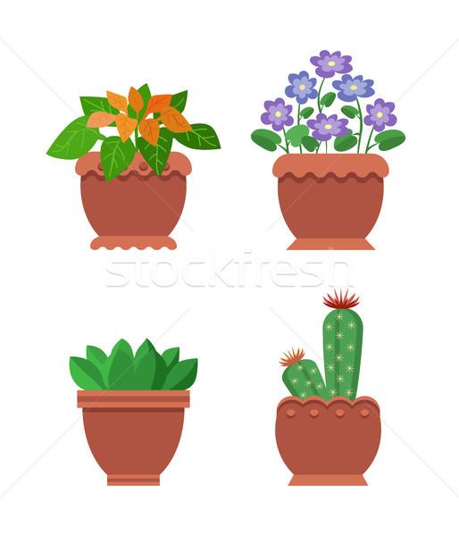 Foto d'archivio: Cactus · raccolta · stanza · impianti · fiori · interni