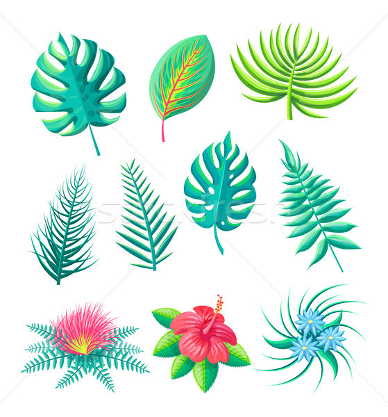Flower and Leaves Tropical Set Vector Illustration Stock photo © robuart