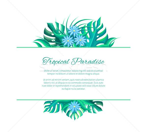 Tropikalnych raj reklama plakat tekst egzotyczny Zdjęcia stock © robuart