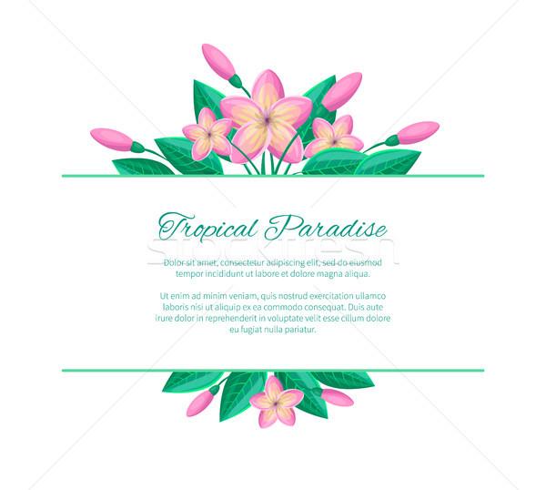 Tropischen Paradies Web Plakat Design Stelle Stock foto © robuart