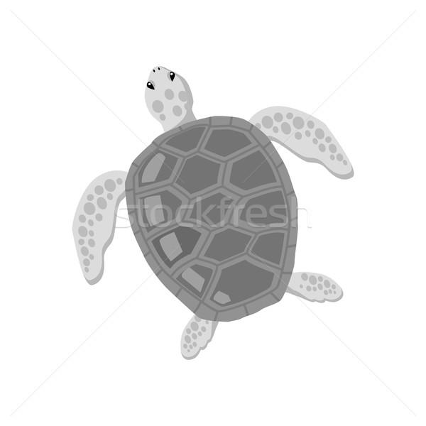 Tartaruga isolato bianco design tartaruga grande Foto d'archivio © robuart