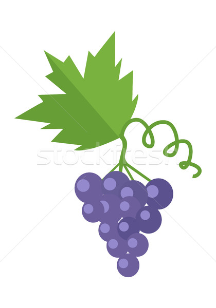 Bunch or Cluster of Red Grapes. Blue Grape Stock photo © robuart