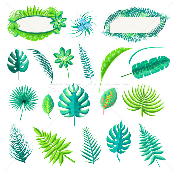 Leaf of Tropical Style Set Vector Illustration Stock photo © robuart