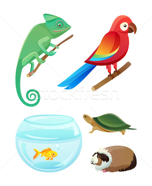 Friendly Pets of Exotic Species and Breeds Set Stock photo © robuart