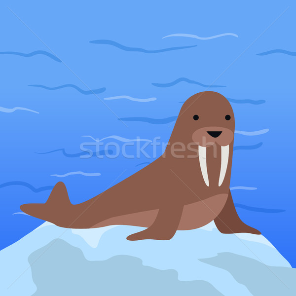 Engraçado morsa ilustração ártico geleira marrom Foto stock © robuart