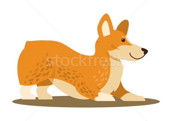 Kutya játékos hangulat ikon házi díszállat Stock fotó © robuart