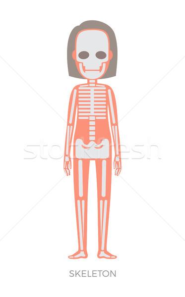 Csontváz nő anatómia testrész struktúra organizmus Stock fotó © robuart