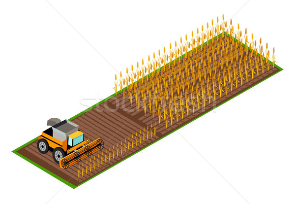 Combine Harvester Gathering Wheat on Field Vector Stock photo © robuart
