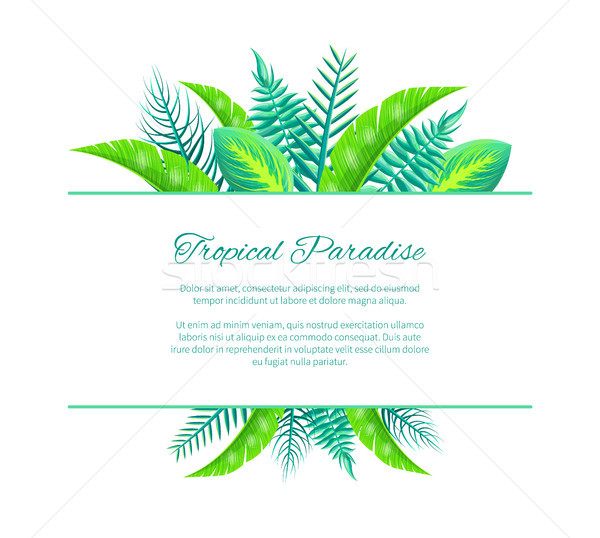 Tropical Paradise Web Poster Design Place for Text Stock photo © robuart