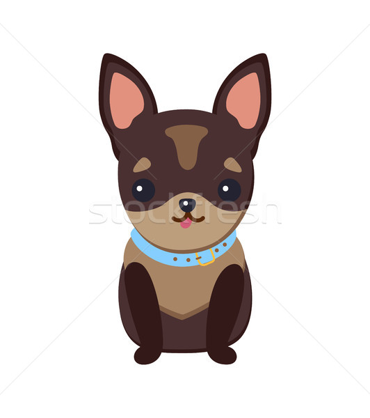 Chihuahua Puppy with Collar Vector Illustration Stock photo © robuart