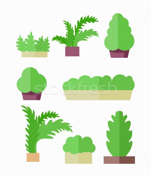Decorative Plants Illustrations in Flat Design. Stock photo © robuart