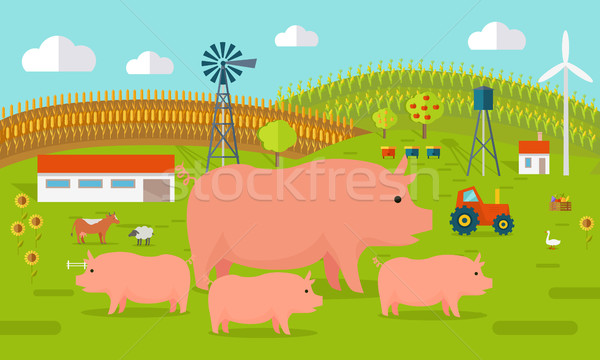 Pigs on Farmyard Concept Illustration.   Stock photo © robuart