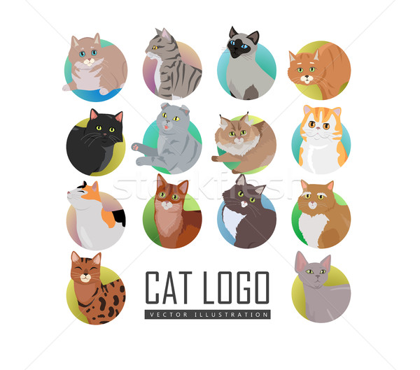 Set of Cat s Faces Vector Flat Design Illustration Stock photo © robuart