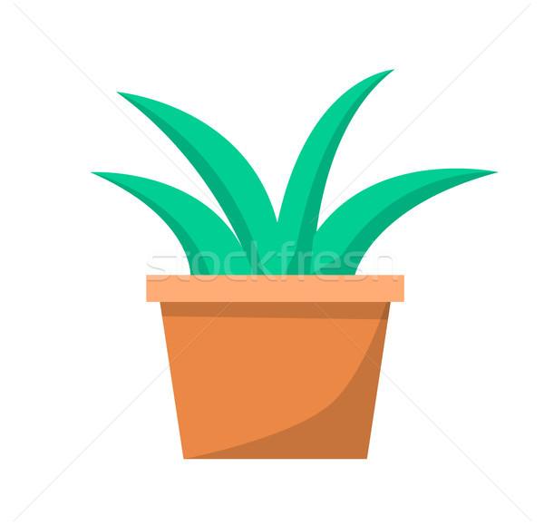 Green Aloe Plant in Clay Pot Vector Illustration Stock photo © robuart