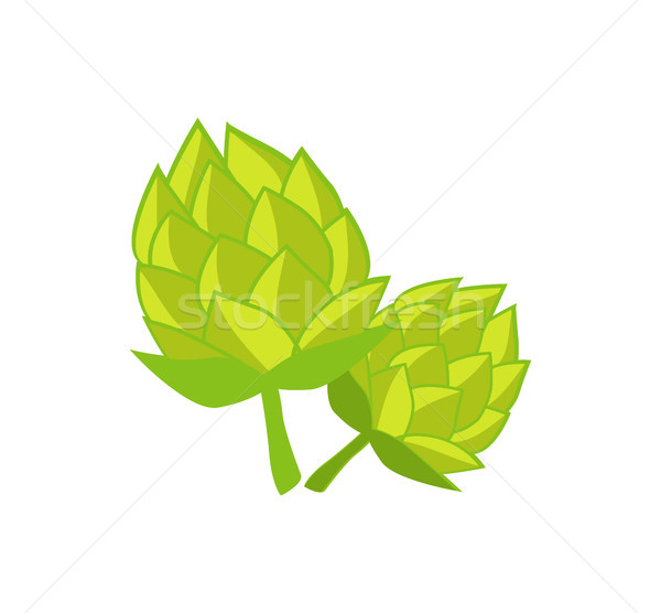 Green Humulus Hop Vector Illustration Isolated Stock photo © robuart